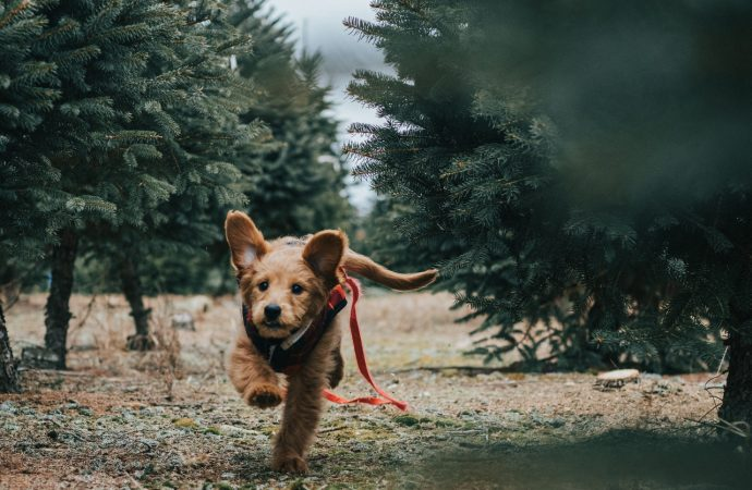 How To Start A Pet Apparel Business In 2021