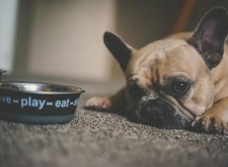 5 Tips For Selecting Dog Bowls For New Pet
